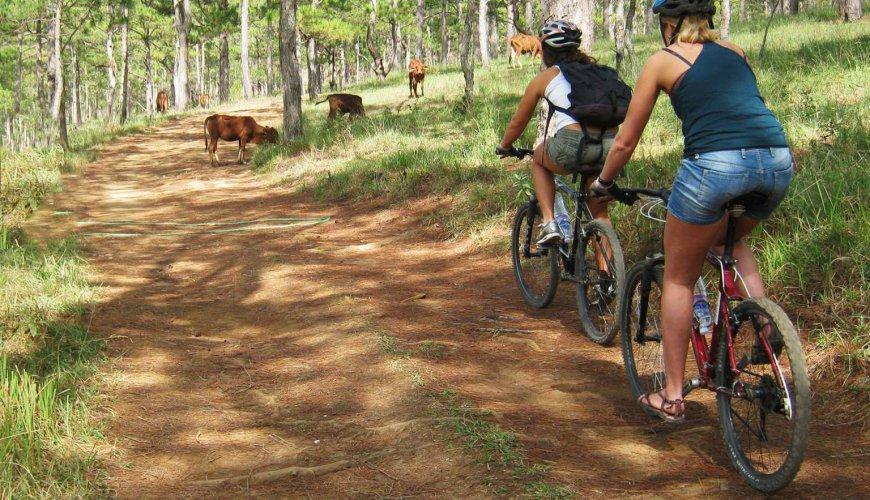 Golden Trail Biking Day Trip