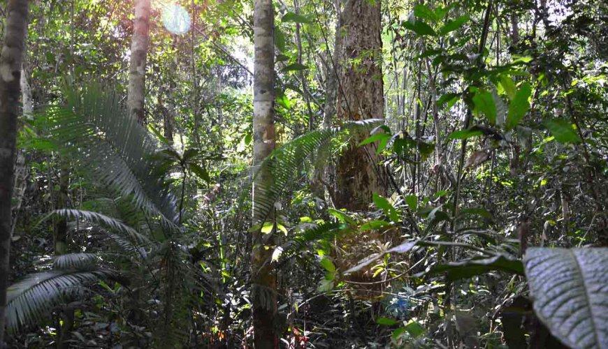 Jungle Trekking Cambodia