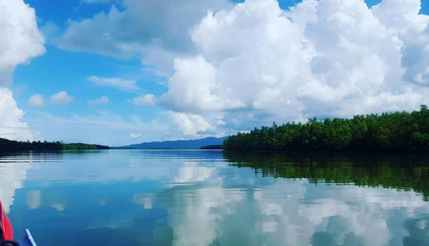 Khaolak Mangrove Kayaking Tour