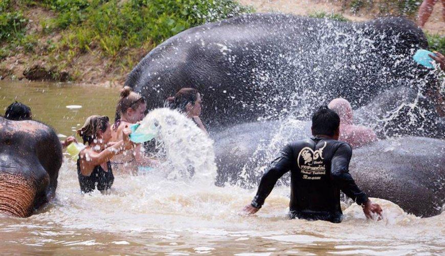 Phuket Elephants Tour